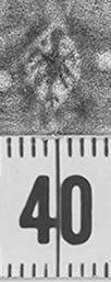 Image Description for http://diglib.hab.de/varia/ebdb/h0000065.jpg