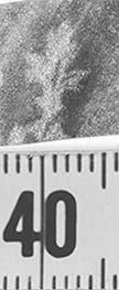 Image Description for http://diglib.hab.de/varia/ebdb/h0000230.jpg