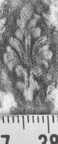 Image Description for http://diglib.hab.de/varia/ebdb/h0000602.jpg