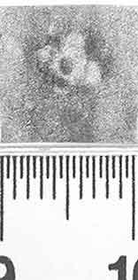 Image Description for http://diglib.hab.de/varia/ebdb/h0000840.jpg