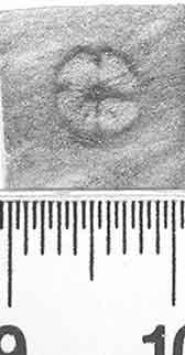 Image Description for http://diglib.hab.de/varia/ebdb/h0000860.jpg