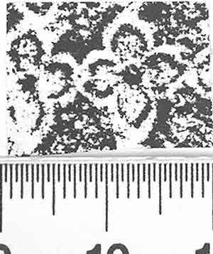 Image Description for http://diglib.hab.de/varia/ebdb/h0000884.jpg