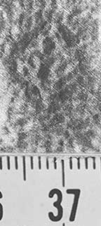 Image Description for http://diglib.hab.de/varia/ebdb/h0002042.jpg