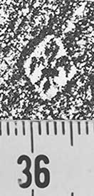 Image Description for http://diglib.hab.de/varia/ebdb/h0002049.jpg