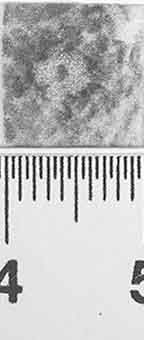 Image Description for http://diglib.hab.de/varia/ebdb/h0002113.jpg