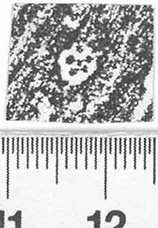 Image Description for http://diglib.hab.de/varia/ebdb/h0002721.jpg