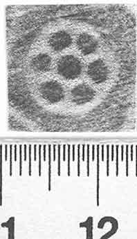 Image Description for http://diglib.hab.de/varia/ebdb/h0002980.jpg