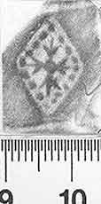 Image Description for http://diglib.hab.de/varia/ebdb/h0003014.jpg