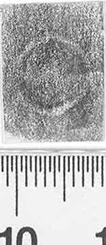 Image Description for http://diglib.hab.de/varia/ebdb/h0003656.jpg