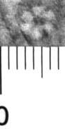 Image Description for http://diglib.hab.de/varia/ebdb/h0004960.jpg