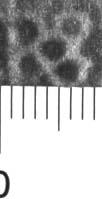 Image Description for http://diglib.hab.de/varia/ebdb/h0004962.jpg