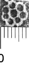 Image Description for http://diglib.hab.de/varia/ebdb/h0005167.jpg