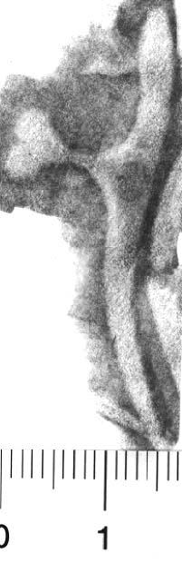Image Description for http://diglib.hab.de/varia/ebdb/h0005429.jpg