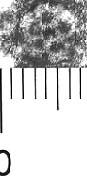 Image Description for http://diglib.hab.de/varia/ebdb/h0005499.jpg