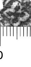 Image Description for http://diglib.hab.de/varia/ebdb/h0005556.jpg