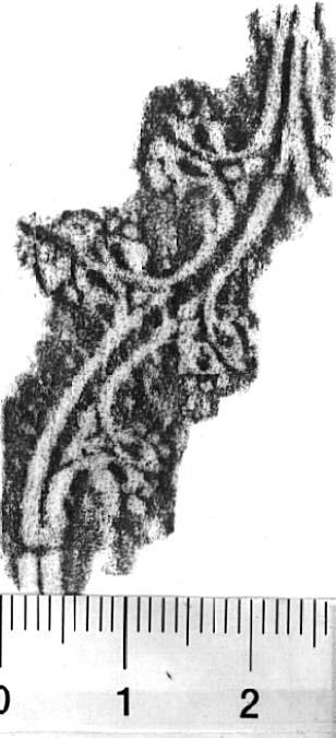 Image Description for http://diglib.hab.de/varia/ebdb/h0005604.jpg