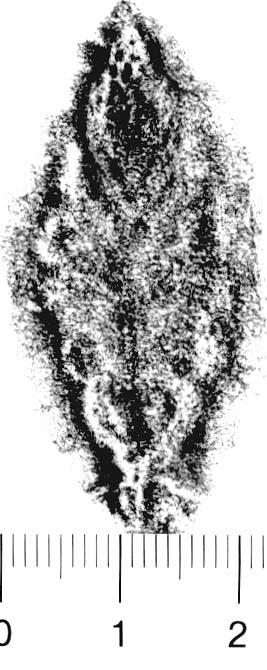 Image Description for http://diglib.hab.de/varia/ebdb/h0005917.jpg
