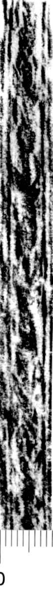 Image Description for http://diglib.hab.de/varia/ebdb/h0005937.jpg