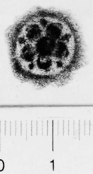 Image Description for http://diglib.hab.de/varia/ebdb/h0006101.jpg