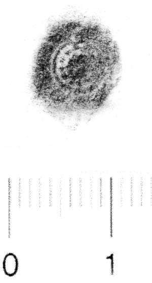 Image Description for http://diglib.hab.de/varia/ebdb/h0006227.jpg