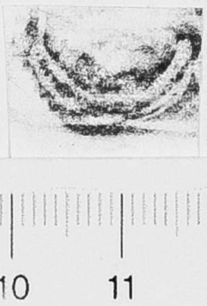 Image Description for http://diglib.hab.de/varia/ebdb/h0006528.jpg